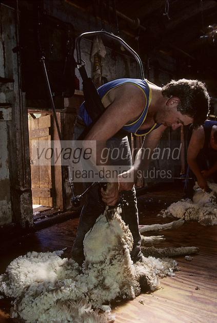 Océanie/Australie/Australie Méridionale/Env de Clare : Bungaree Station - Elevage des moutons dans un ranch - La tonte