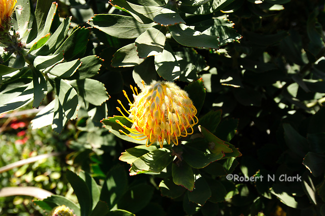 Exotic plant at the flower fields