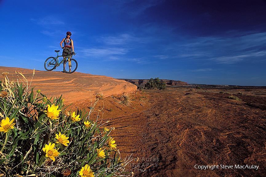 Female mountain biker standing with bike by yellow mule's ears flowers, Bartlett Wash, Utah