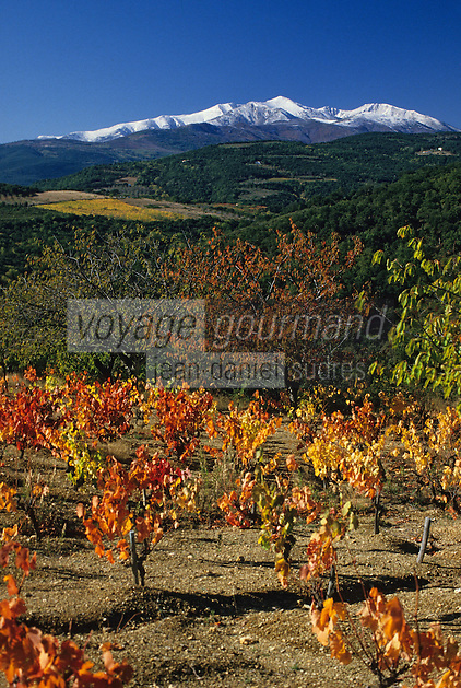 Europe/France/Languedoc-Roussillon/66/Pyrénées-Orientales/Vallespir/Env Céret: AOC Côtes du Roussillon - Vignes et Canigou