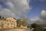 Israel, Shephelah, Olive picking season in Beth Gemal