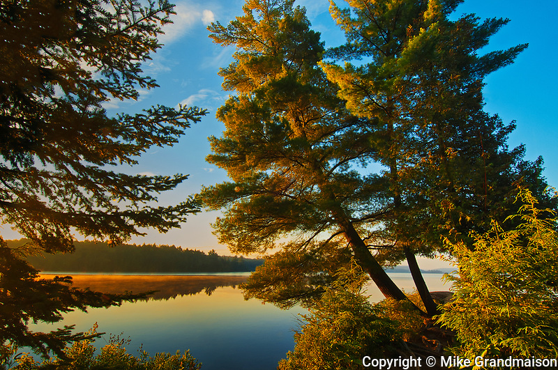 WHite pine trees on Lake of Two Rivers<br />