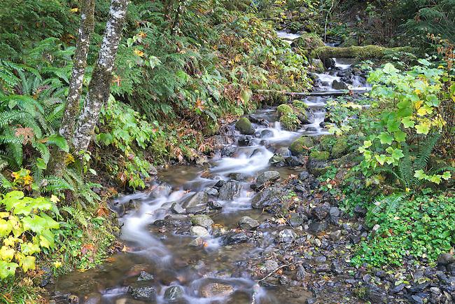 Small creek in autumn North Cascades Washington State