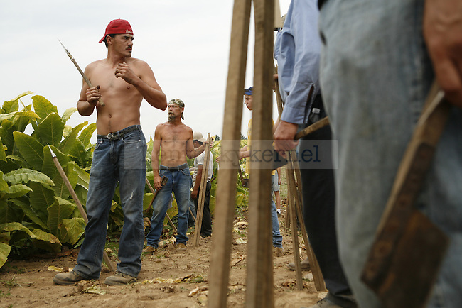 Alvin Stamper, 26, and other participants in the Garrard County Tobacco Cutting Contest prepare to start cutting at G.B. Shell Farm in Lancaster, Ky. on Sept. 3, 2009.