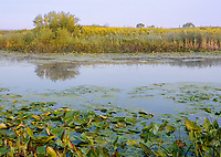 A wetland pond is lit with early morning light at Springbrook Prairie Forest Preserve in DuPage County, Illinois