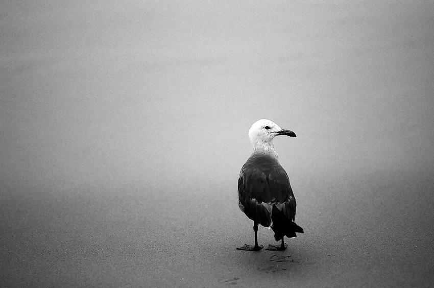Sea Gull, Ilford Delta Film