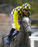 Alfred Boucher ridden by David Probert goes down to the start of The Brunton Publications Pembroke Handicap during Horse Racing at Salisbury Racecourse on 14th August 2019