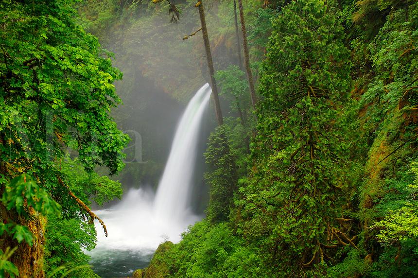 Metlako Falls along the Eagle Creek Trail (# 440), Columbia River Gorge National Scenic Area, Oregon