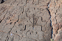 Petroglyphs or ki'i pohaku at 'Anaeho'omalu Petroglyph Field (a.k.a. Waikoloa Petroglyph Field), Big Island.
