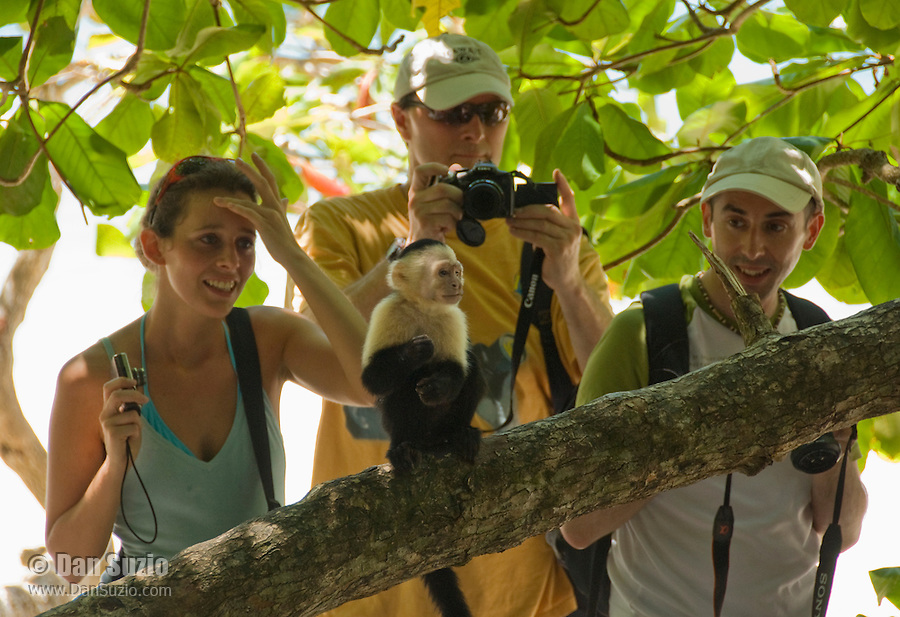 Tourists get a close look at a white-faced capuchin, Cebus capucinus, in Manuel Antonio National Park, Costa Rica