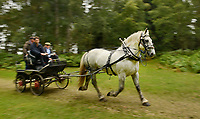 BNPS.co.uk (01202 558833)<br /> Pic: ZacharyCulpin/BNPS<br /> <br /> Horse Play....<br /> <br /> Teams race through forest during the New Forest Heavy Horse relay.<br /> <br /> The relay is in its 15th year and the runners and riders compete on an 30 Kilometre course around the picturesque Bolderwood in the New Forest, Hampshire