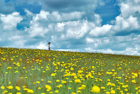 Child in field with dandelions and cumulus clouds. Near Monroe, Oregon.