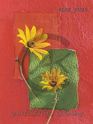 Jacek, FLOWERS, portrait, macro, photos, PLSE, PLSEB026,#F# Blumen, flores, retrato