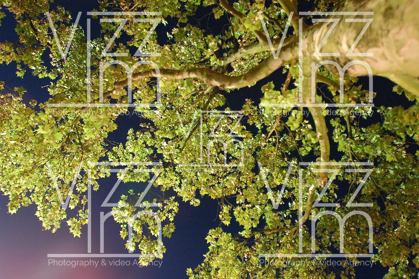 AMSTERDAM-HOLANDA- Vista nocturna de un árbol en contrapicado./ Night high angle view of a tree.   Photo: VizzorImage/STR