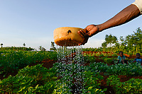 TANZANIA, Tarime District, village Kewamaba, farmer irrigates vegetable field / TANSANIA, Kleinbauer bewaessert den Gemuesegarten am Abend