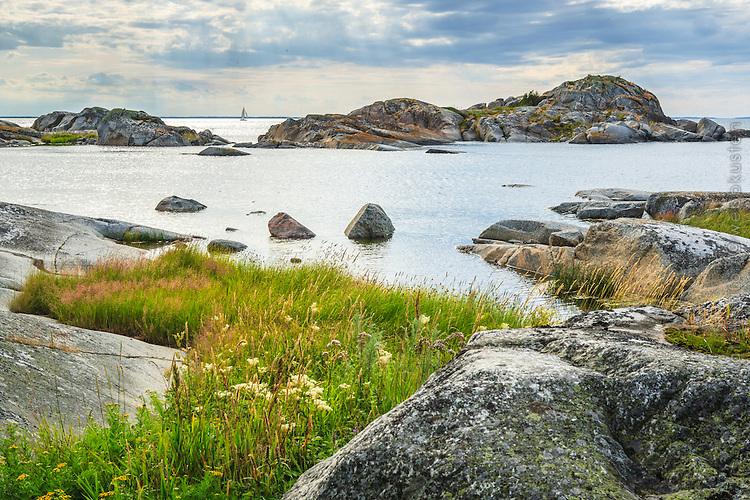 Klippor gräs och vass på Stora-Nassa i Stockholms ytterskärgård