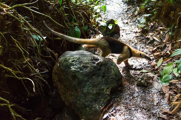 Costa Rica, Corcovado National Park, Osa Peninsula