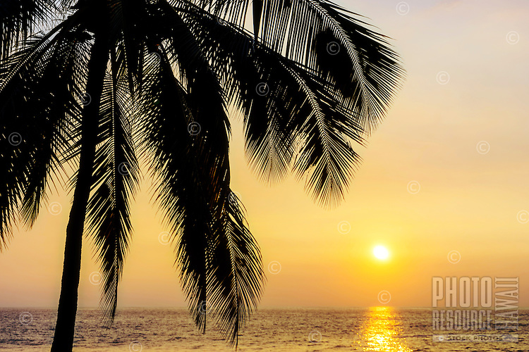 A golden sunset and silhouetted palm tree, Kailua-Kona, Hawai'i Island.