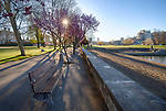 Idaho, North, Kootenai County, Coeur d'Alene. Pink flowering trees line the seawall at city park on a spring morning.