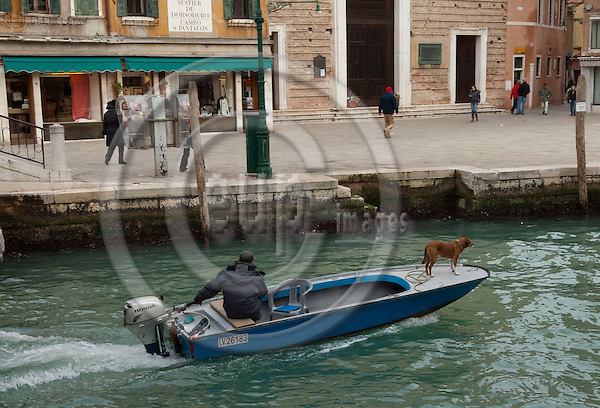 Dorsoduro-Venice-Italy, January 25, 2011 -- A master cruises his dog with motor boat on Rio di Ca' Foscari -- water, transport, infrastructure, people -- Photo: Horst Wagner / eup-images