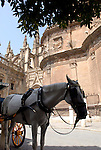 A horse drawn carriage stand in the shade outside the Cathedral of Saint Mary of the See in Seville. The largest gothic cathedral in the world, It occupies the site of Hagia Sophia, a mosque built by the Almohads in the late 12th century. La Giralda, its bell tower, is a legacy from the Moorish structure.
