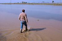 """Nelle provincie di Novara e Vercelli si concentra , storicamente, la maggior produzione in Italia di riso..L'industrializzazione dell'agricoltura non ha però  del tutto eliminato il lavoro manuale.. Le """"mondariso"""", le mondine , rese celebri dal film """"Riso amaro"""" girato proprio in queste zone, ora sono immigrate cinesi che da giugno a settembre ripuliscono  questi campi allagati dalle piante infestanti che nemmeno i diserbanti sono in grado di riconoscere..In north Italy the rice'culture is very estendet, in Novara and Vercelli' provinces..Each year come from China many women to work in the rice-fields.."""