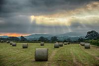Hay bales near Glasbury, Powys.