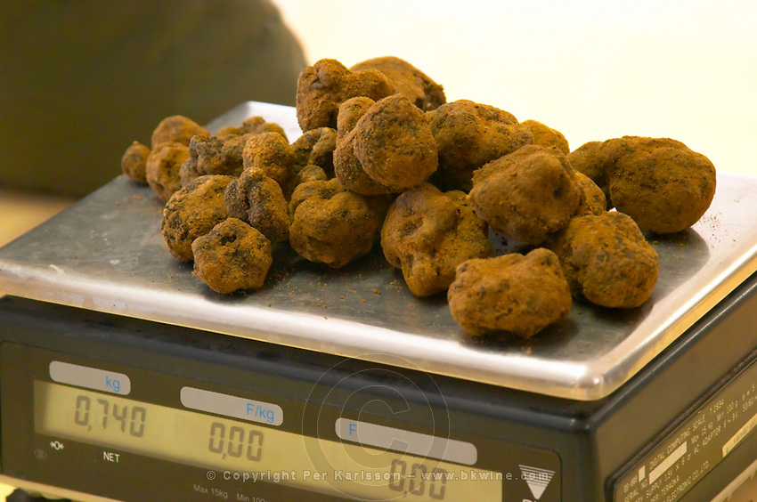 Weighing The morning's truffle harvest at La Truffe de Ventoux truffle farm 740 grams, Vaucluse, Rhone, Provence, France