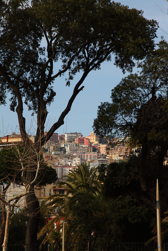 Napoli: A glimpse to a part of the colorful high town across the vegetation of the villa Comunale (the communal garden), that is located along the seafront. One can notice in particular some pines and a palm tree.<br />