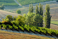 Italien, Piemont, Weinberge bei Sala Monferrato | Italy, Piedmont, vineyards around Sala Monferrato