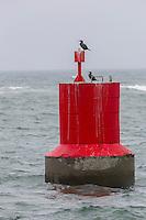 France, Bretagne, (29), Finistère,  Le Guilvinec: Balise et cormorans