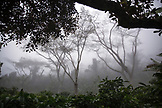 INDONESIA, Flores, detail of the rainforest and fog in Wae Rebo Village