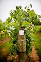 West Bend Vineyard and Winery | Yadkin Valley, NC