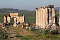 The Decumanus Maximus or Main Street, with the Ionic columns of the Forum or marketplace and the Triumphal Arch of Caracalla, built 217 AD by the city's governor Marcus Aurelius Sebastenus in honour of Emperor Caracalla, 188-217 AD, and his mother Julia Domna, Volubilis, Northern Morocco. Volubilis was founded in the 3rd century BC by the Phoenicians and was a Roman settlement from the 1st century AD. Volubilis was a thriving Roman olive growing town until 280 AD and was settled until the 11th century. The buildings were largely destroyed by an earthquake in the 18th century and have since been excavated and partly restored. Volubilis was listed as a UNESCO World Heritage Site in 1997. Picture by Manuel Cohen