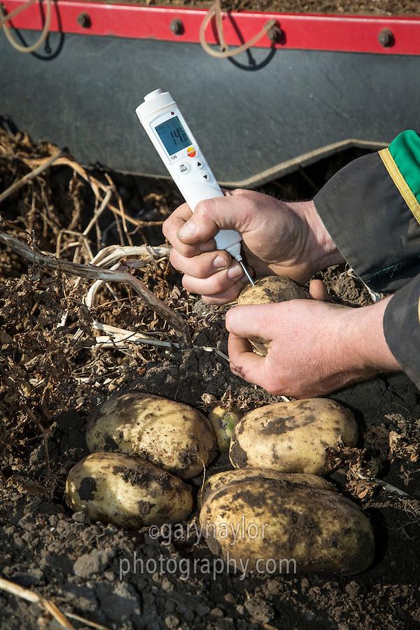 Checking potato tuber temperature