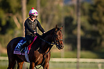 OCT 29: Breeders' Cup Juvenile Fillies entrant Perfect Alibi, trained by Mark E. Casse, gallops at Santa Anita Park in Arcadia, California on Oct 29, 2019. Evers/Eclipse Sportswire/Breeders' Cup