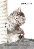 Marek, ANIMALS, REALISTISCHE TIERE, ANIMALES REALISTICOS, cats, photos+++++,PLMP2374,#a#