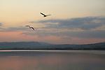 Israel, the Sea of Galilee at dusk