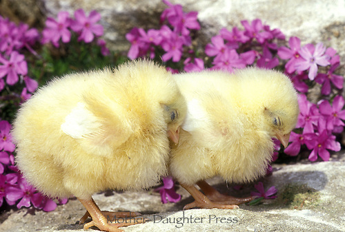 Chicks sleeping with purple flowers