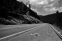 A dead mule deer doe lies by the side of Route 200 a few miles northeast of Lincoln, Montana.