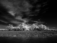 A mangrove island photographed in infrared in the Florida Everglades and the ten thousand islands near Chokoloskee in Collier County, Florida. Photo/Andrew Shurtleff