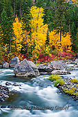 Tom Mackie, LANDSCAPES, LANDSCHAFTEN, PAISAJES, photos,+America, American, Americana, North America, Pacific Northwest, Tom Mackie, Tumwater Canyon, USA, Washington, Wenatchee Natio+nal Forest, Wenatchee River, autumn, autumnal, cascade, cascading, colorful, colourful, fall, flow, flowing, inspiration, ins+pirational, inspire, natural, nature, no people, portrait, river, riverside, scenery, scenic, season, tree, trees, upright, v+ertical, water, water's edge, wilderness, yellow,America, American, Americana, North America, Pacific Northwest, Tom Mackie,+,GBTM170597-1,#l#, EVERYDAY