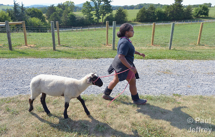 Sara Goitom, a resettled refugee from Eritrea, walks her sheep on a farm in Linville, Virginia, on July 18, 2017. Goitom and other refugee youth, resettled in the area by Church World Service, are preparing to show sheep and goats in a county fair.<br /> <br /> Photo by Paul Jeffrey for Church World Service.