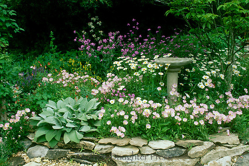 Blooming flowers around a stone pedestal birdbath - the blend of two gardens 60 years apart