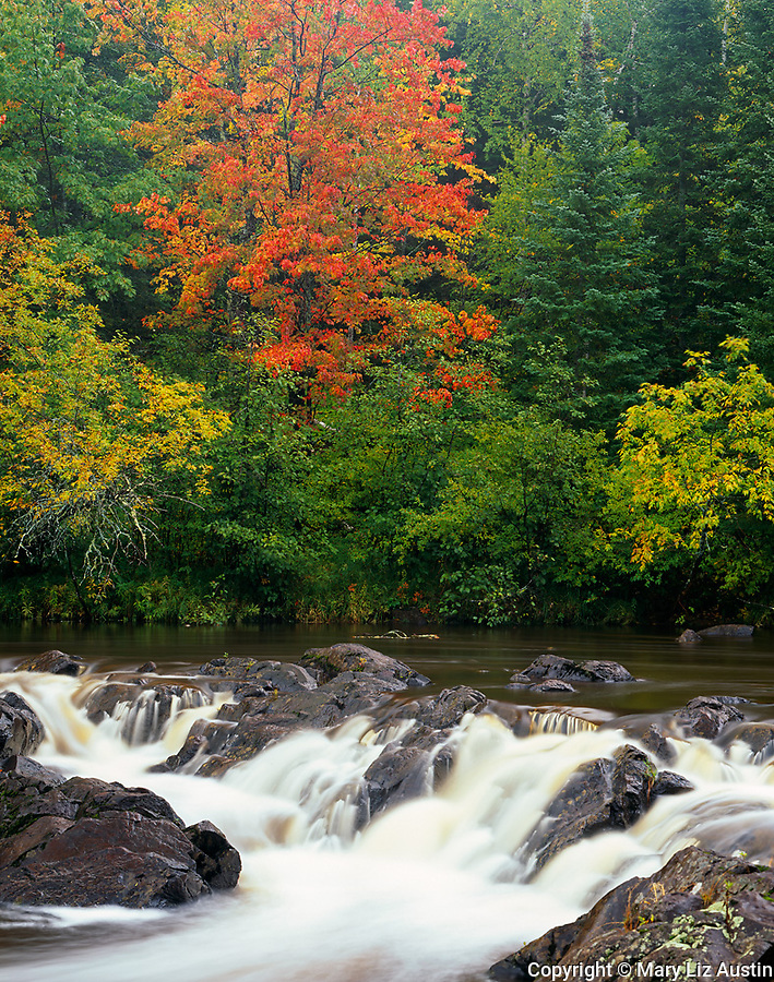 Pattison State Park, WI<br /> Small falls on the Black River with hardwood forest in early fall color