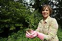 Noreen Van der Velde's nettles growing in her garden at home in County Antrim, Friday, August 9, 2019. (Photo by Paul McErlane for the Belfast Telegraph)
