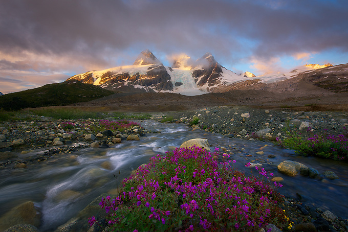 Streams converge over a patch of wildflowers at sunrise in the Coast Mountains.