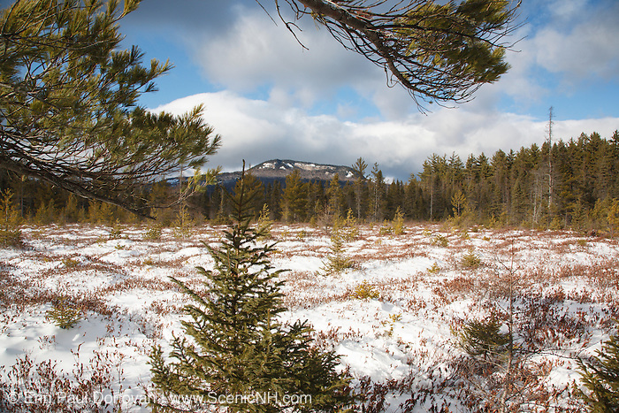 """Greens Cliff from a wetlands area near Church Pond in the White Mountains, New Hampshire USA. This area is referred to as """"the bog"""" and was part of the Swift River Railroad era, which was a logging railroad in operation from 1906 - 1916."""