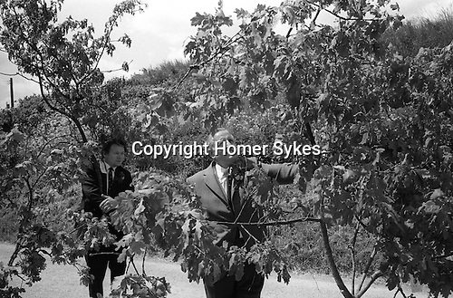 Grovely Forest Rights, Great Wishford,  Wiltshire England 1974.<br />