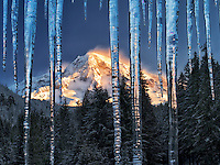 Icicles and Mt. Rainier. Mt. Rainier National Park, Washington